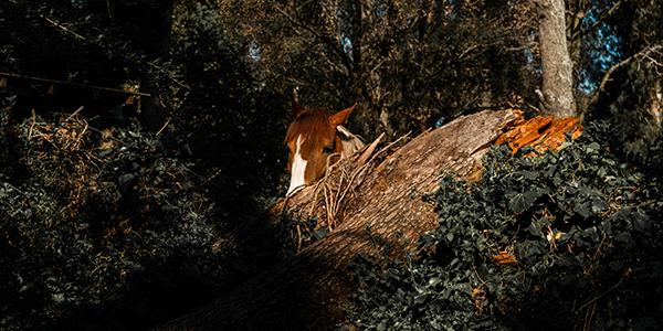 Foto de un caballo entre follaje, hecha por Mich Luna