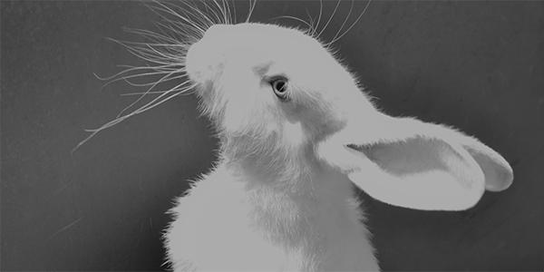 Foto de un conejo blanco, hecha por Vanina Santos